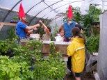 Dans la serre avec les « nains de jardin »